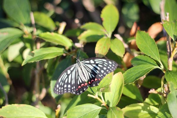 09蝶 のコピー
