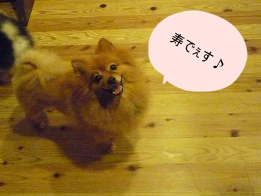 Kotochan1108.jpg