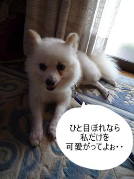 azuki110911.jpg