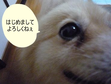 kinako110901.jpg