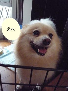 kinako110901_2.jpg