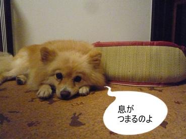 kinako110915_3.jpg