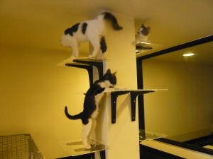 3人娘と猫タワー