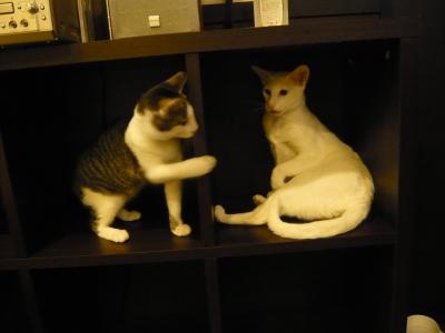 モアニとマナ