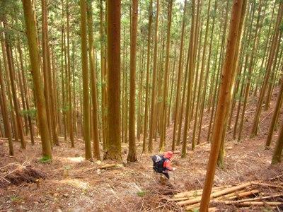 20090222野中~熊野本宮大社 (201)
