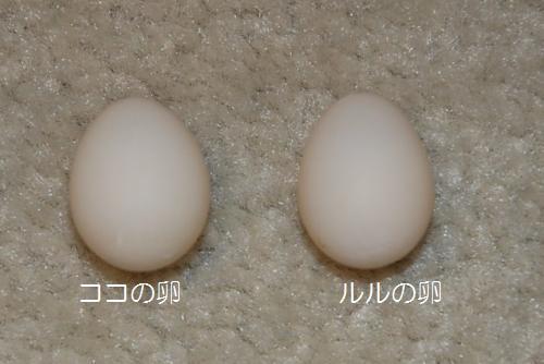 ココとルルの卵