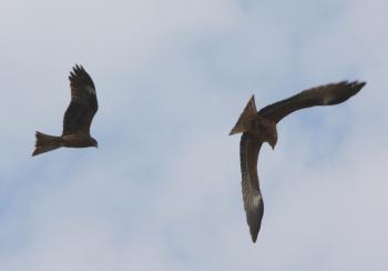 birds02_convert (1)