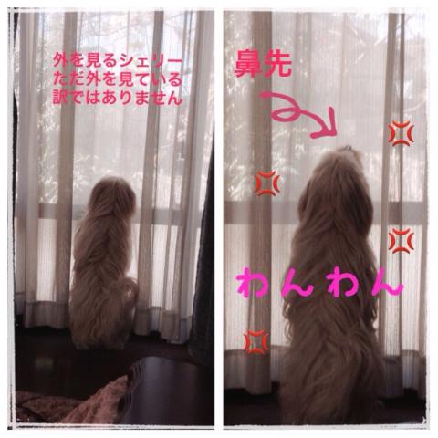 20141203181535145.jpg