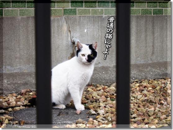 普通の猫にゃ