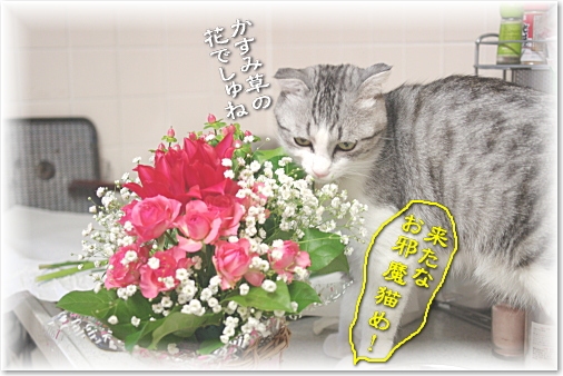 お花大好きでしゅ