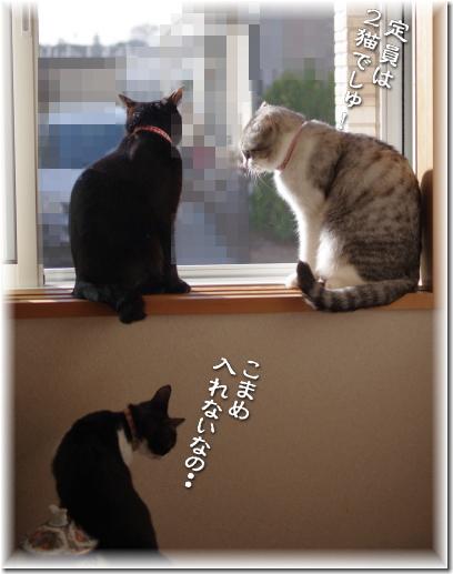 定員は2猫でしゅ