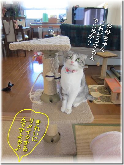 猫タワーでしゅ