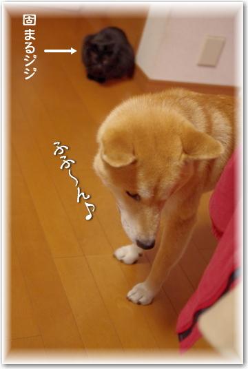 jiji-4-2.jpg