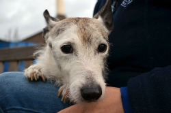 16527_First-Stray-of-the-year-at-Battersea-Dogs-_-Cats-Home---Will-1_web.jpg