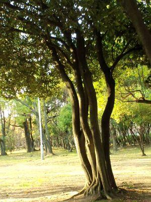 大仙公園20101229_400