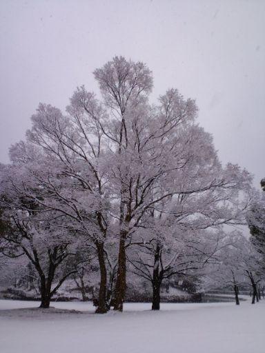 大雪20110211 2_512