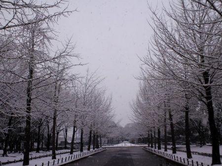 大雪20110211 3_450