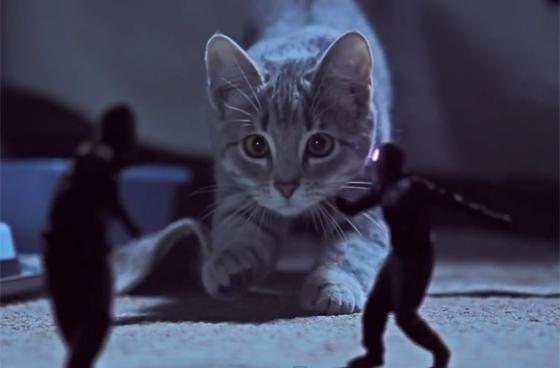 kittens-on-the-beat.jpg