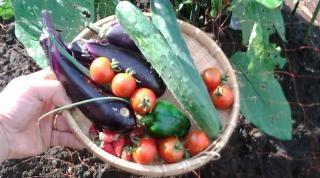 野菜収穫0710