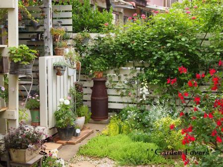 今日のお庭