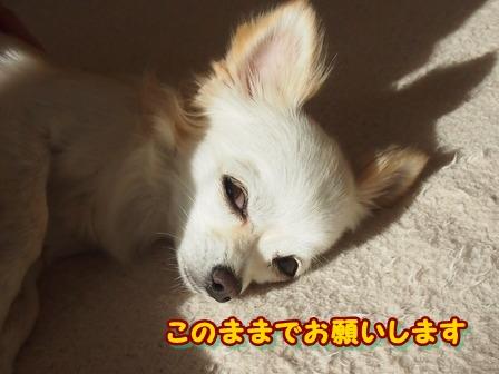 blog3100a.jpg