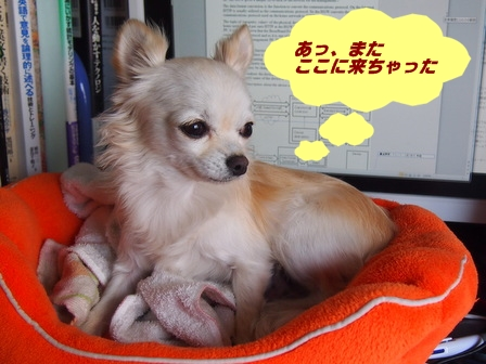 blog3233a.jpg