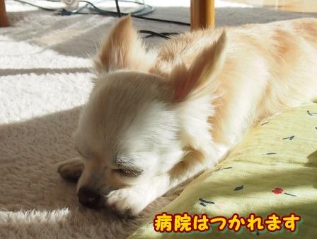 blog3288a.jpg