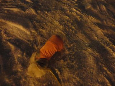 雪すりすりわんこ