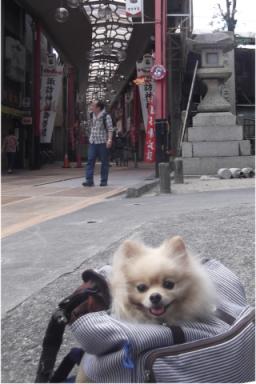 諏訪神社の横は商店街でち