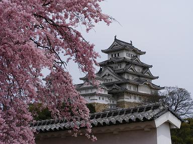 しだれ桜&お城