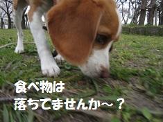004_20120403131412.jpg