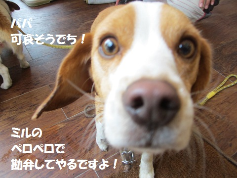 013_20120413164907.jpg