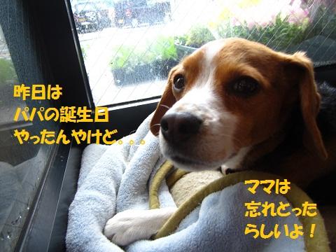 020_20120413164908.jpg