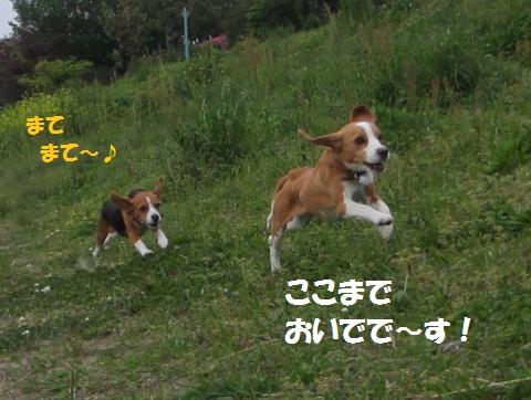 020_20120425111251.jpg