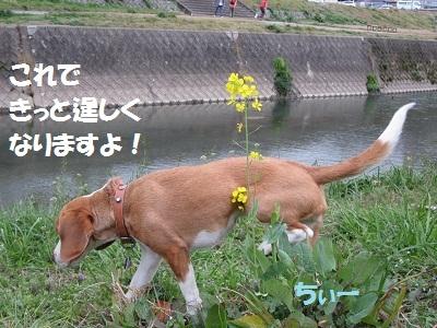 024_20120321070708.jpg