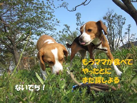 040_20120418152926.jpg