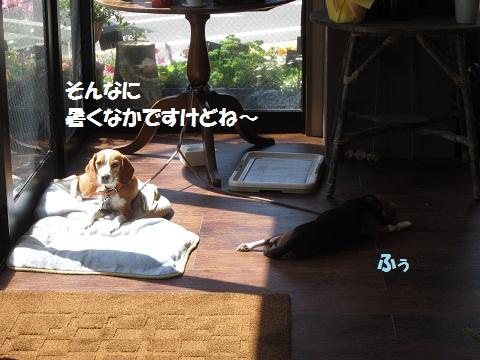 053_20120410064810.jpg