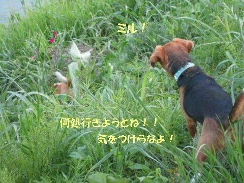 IMG_3012_sh01.jpg