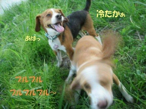 IMG_3031_sh01.jpg