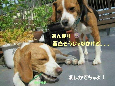 IMG_3434_sh01.jpg