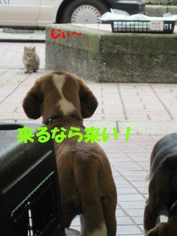 IMG_3527_sh02.jpg