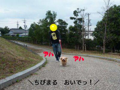 l_pdf.png