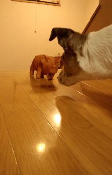 豚のおもちゃ1