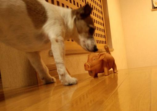 豚のおもちゃ3