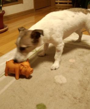 豚のおもちゃ4