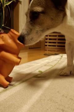 豚のおもちゃ5