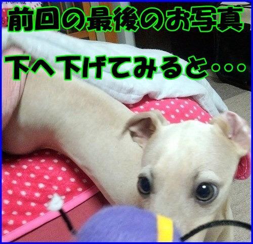 041_20120409233612.jpg