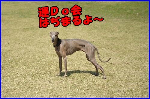 DSC_0031_20120501222856.jpg
