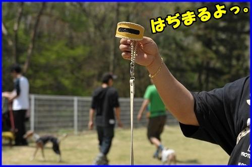 DSC_0036_20120501222857.jpg