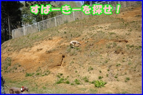 DSC_0098_20120501223032.jpg